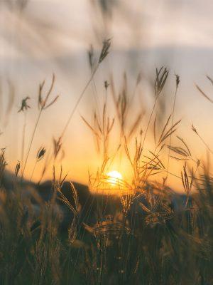Gateway_Sunset